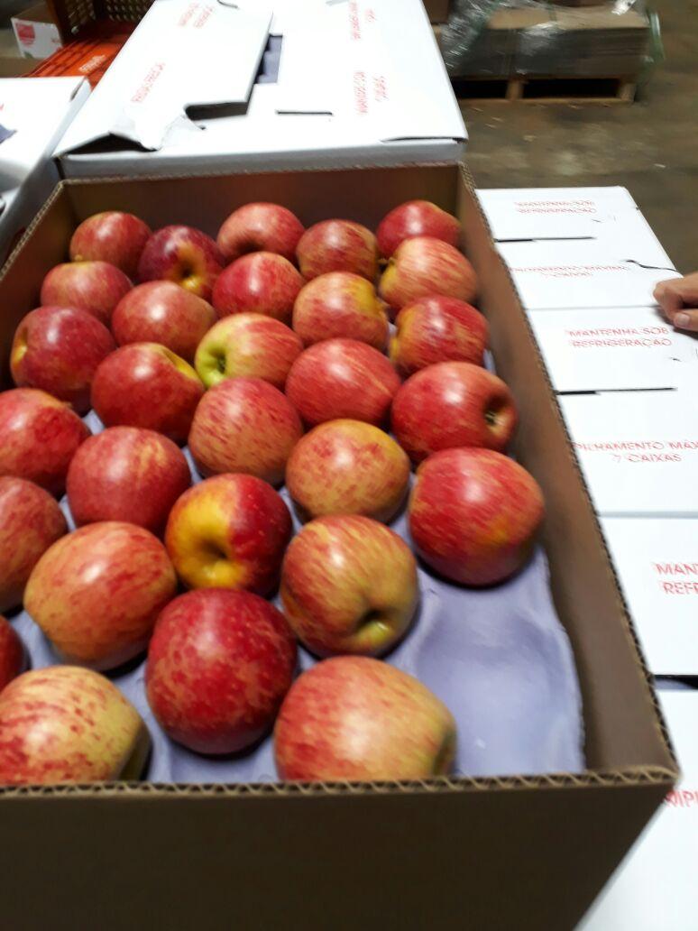 Colheita da maçã em Palmas está atrasada