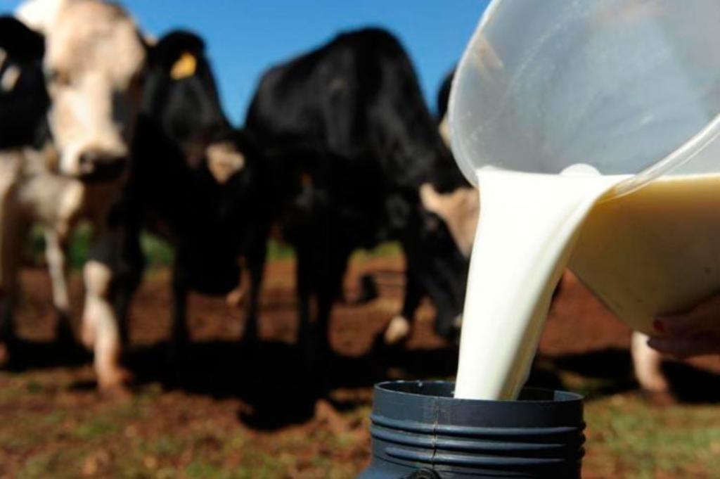 Aplicativo ajuda produtor a acompanhar crescimento e reprodução do rebanho leiteiro