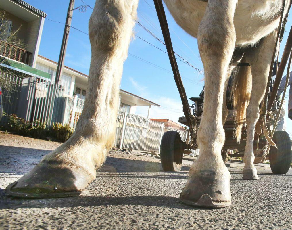 Sancionada Lei que proíbe trânsito de carroças em Palmas