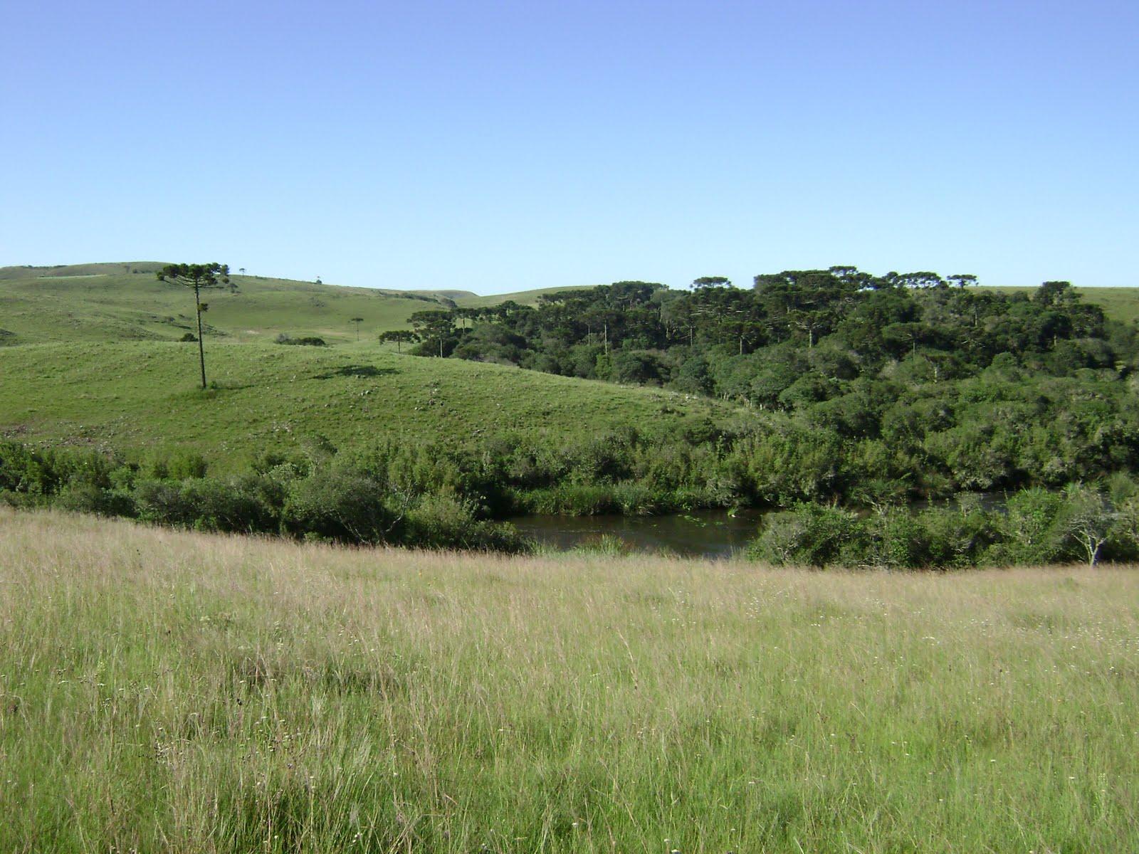 Região de Palmas destina mais de 146 mil hectares à preservação
