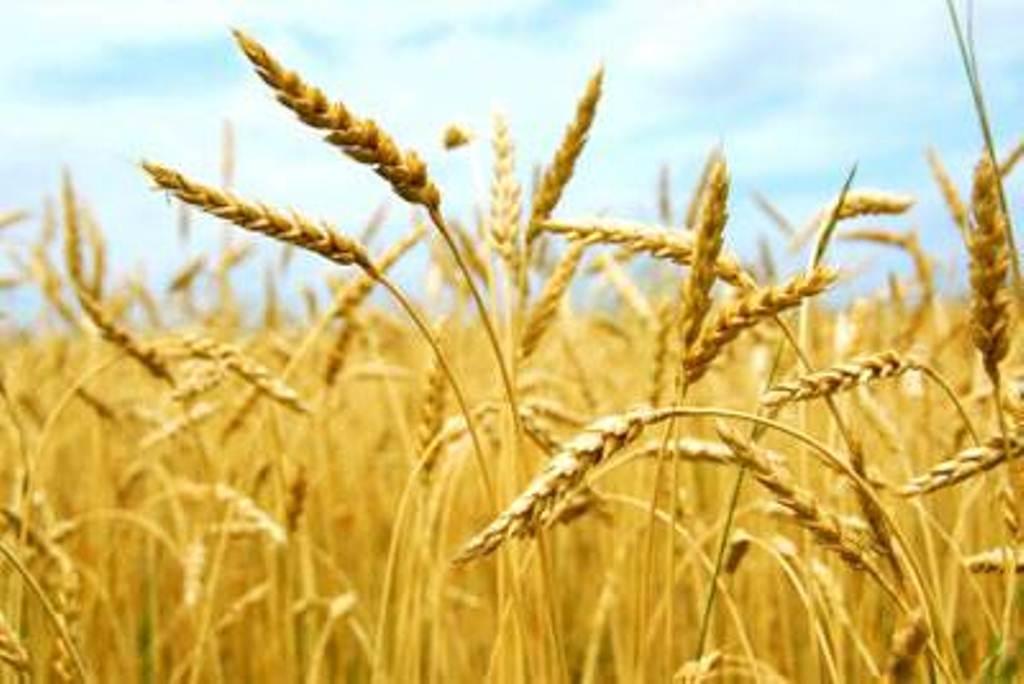 Clima começa preocupar produtores agrícolas da região