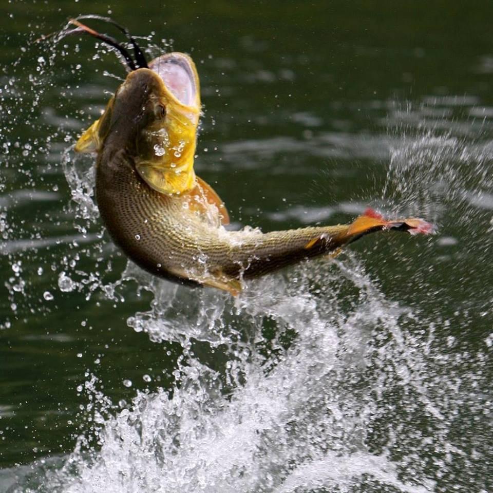 Temporada de pesca à truta até dia 15 em Palmas