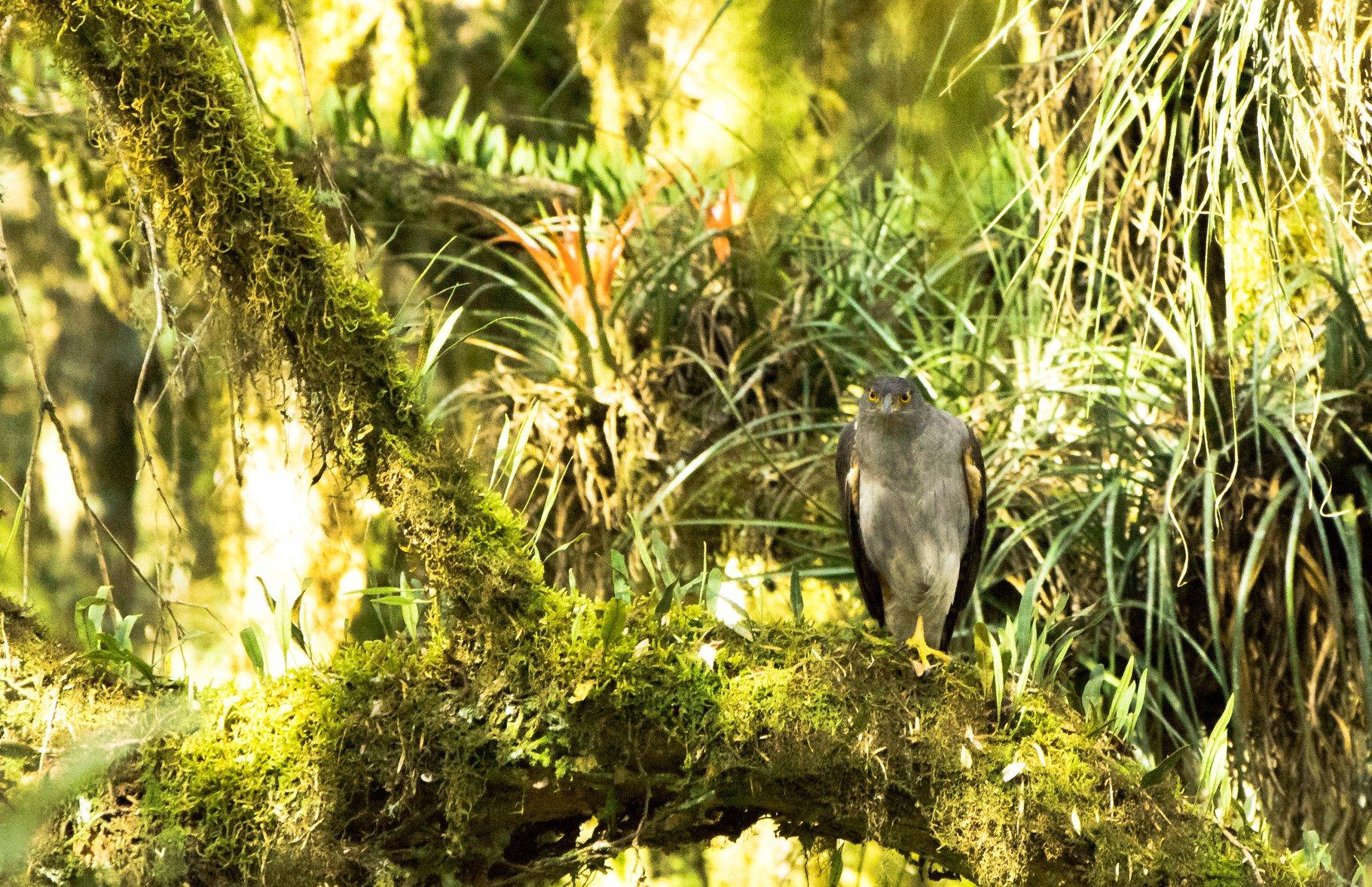 Registrados nos Campos de Palmas águias e gaviões em extinção