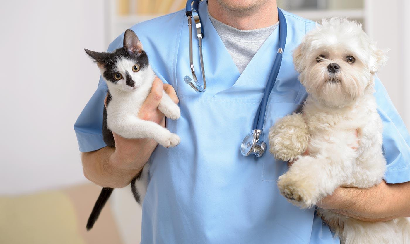 Veterinário comenta benefícios da castração animal