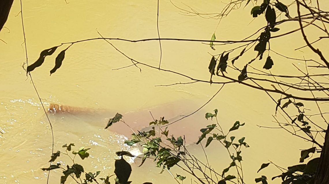 Carro que caiu no rio Marrecas é localizado em Francisco Beltrão