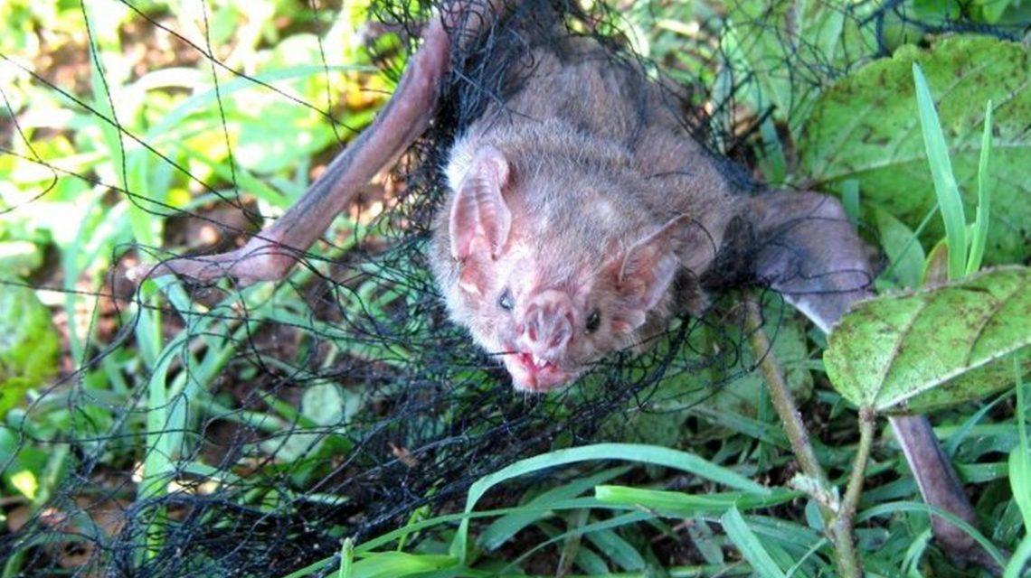 Autoridades sanitárias monitoram morte de animais por raiva em Ampére