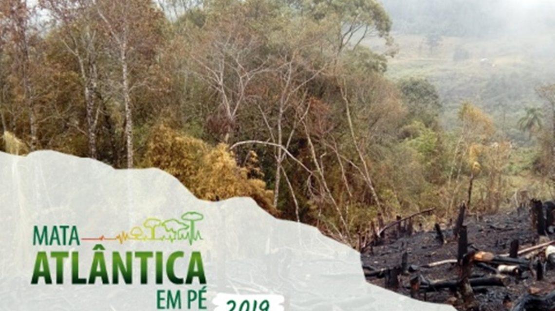 Operação Mata Atlântica em Pé no Paraná ultrapassou 6 milhões em multas