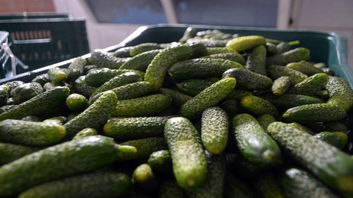 Chopinzinho abre chamamento público para agricultura familiar