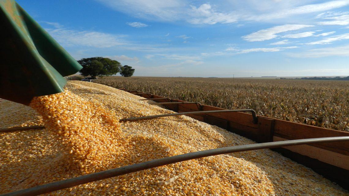 IBGE: Safra de grãos deve fechar 2019 com crescimento de 5,9%