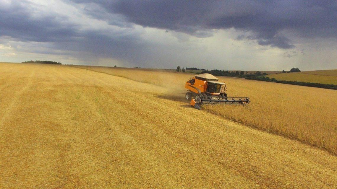 Seab estima colheita de cerca de um milhão de toneladas de soja na microrregião de Francisco Beltrão