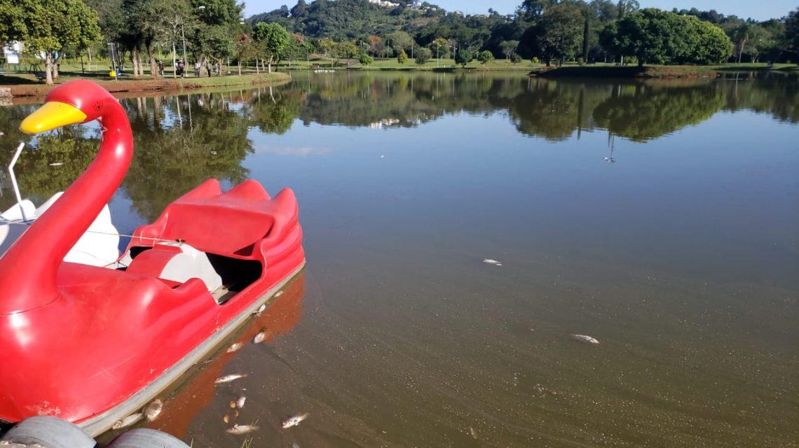 Peixes aparecem mortos no lago Alvorada em Francisco Beltrão