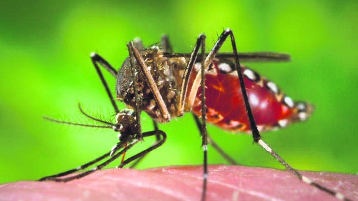 Prefeitura de Clevelândia decreta situação de emergência por risco de dengue