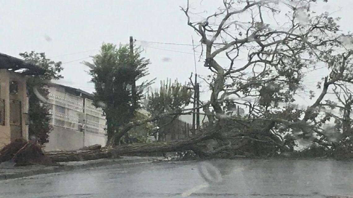Temporal deixa árvores caídas e causa destelhamento em Francisco Beltrão