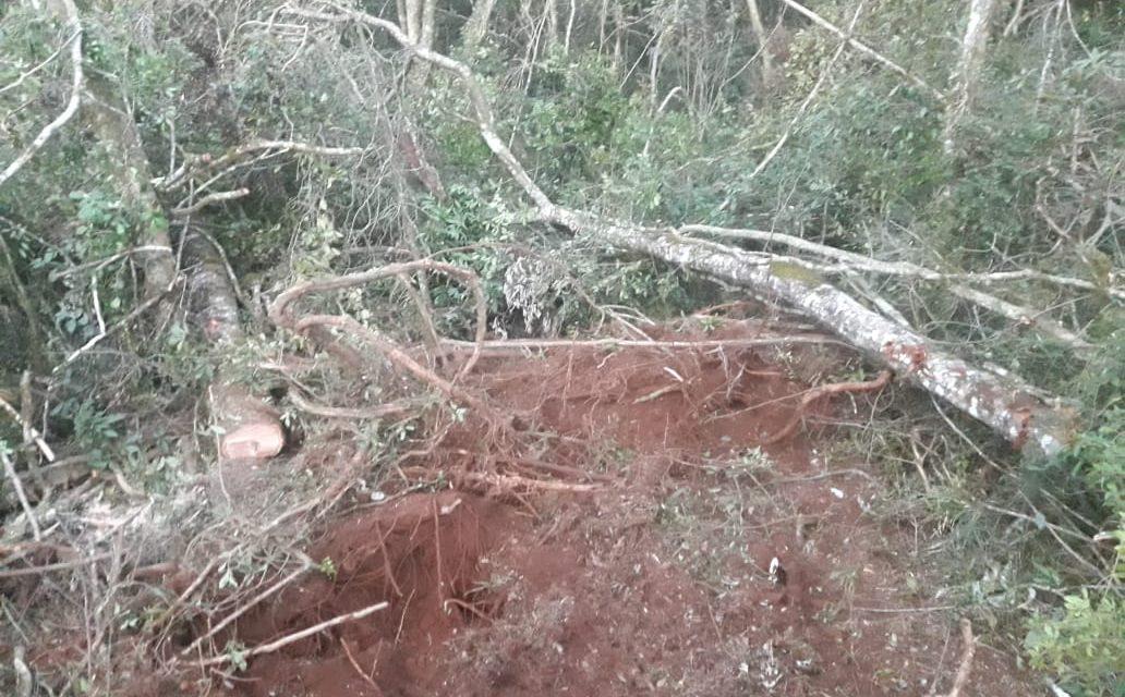 Homem é detido por corte ilegal de árvores nativas em Palmas