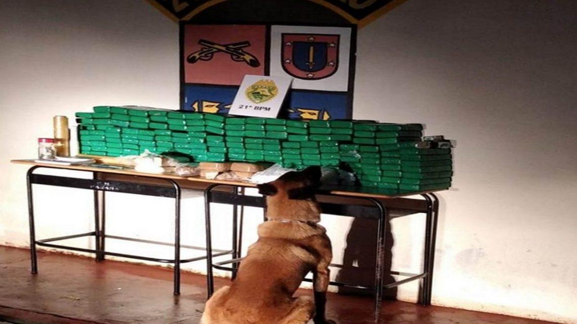 Suspeito de tráfico é preso em Francisco Beltrão com grande quantidade de drogas