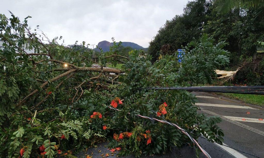 Rodovia interditada com a queda de árvore em Apiúna