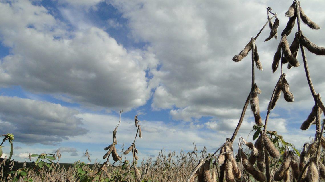 Palmas supera média nacional de produtividade de soja