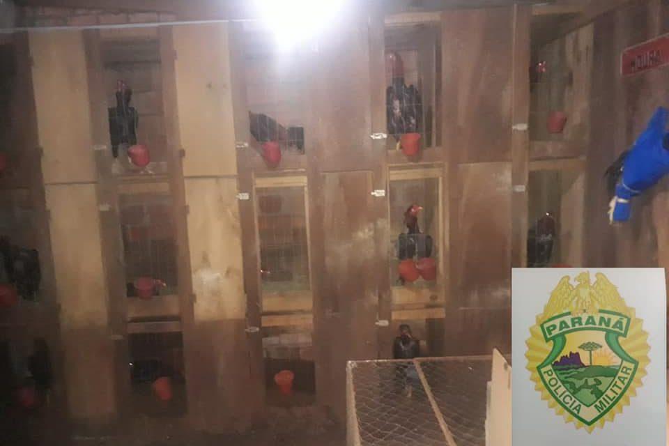 Polícia Militar fecha rinha de galo em Mangueirinha