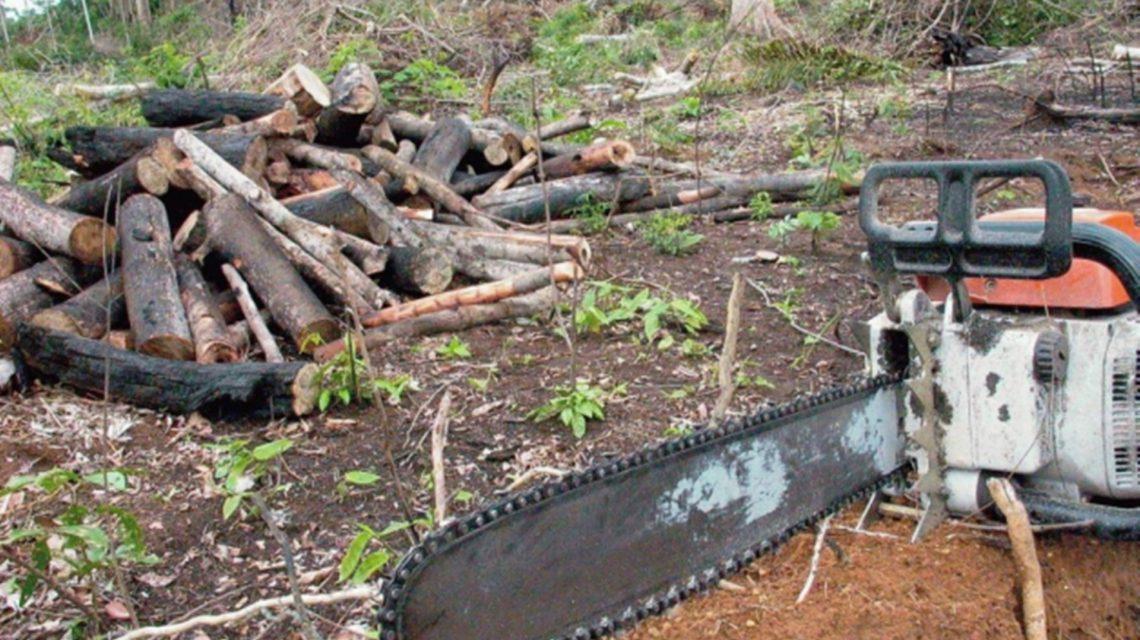 Polícia Militar registra desmatamento em Candói