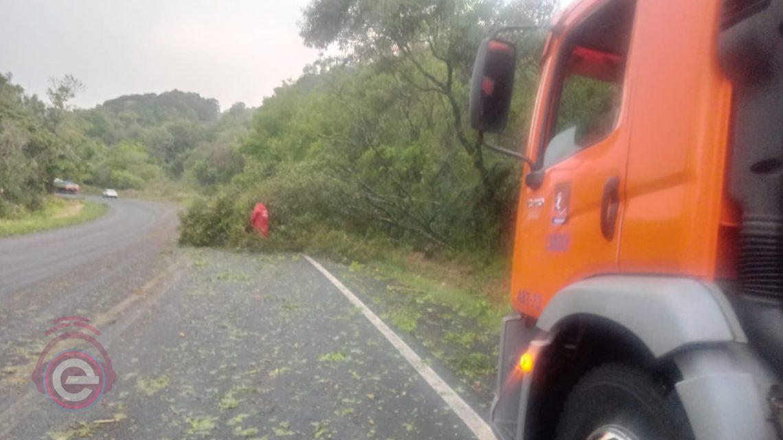 Vendaval derruba árvores na BR-373 entre Candói e Chopinzinho