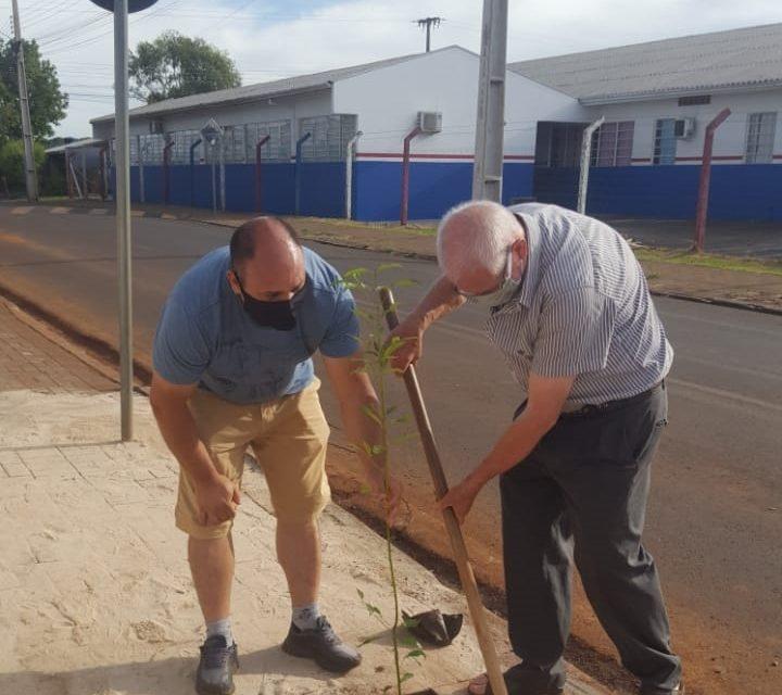 CNBB orienta que sejam plantadas árvores em memória dos falecidos