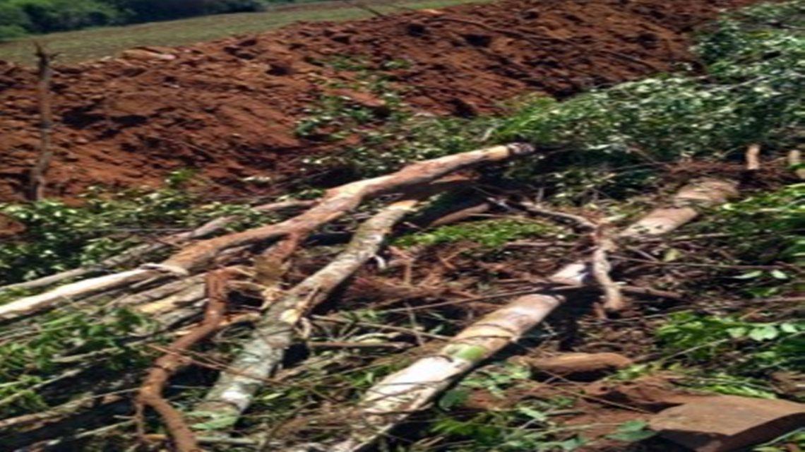 Polícia Militar constata derrubada de árvores nativas em São João