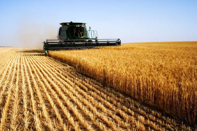 agricola-e1548089353131